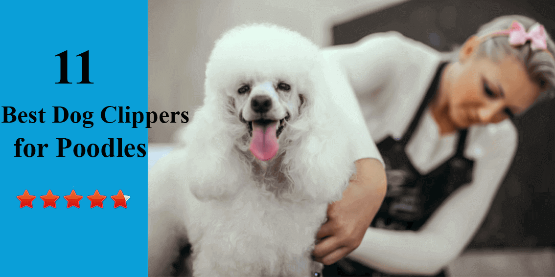 best_dog_clippers_for_poodles