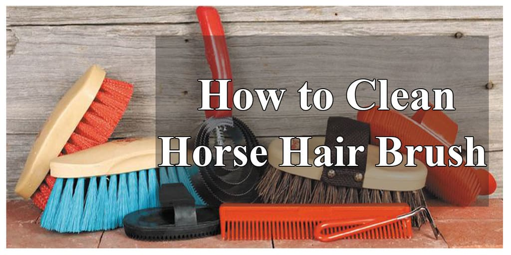 How_to_Clean_Horse_Hair_Brush
