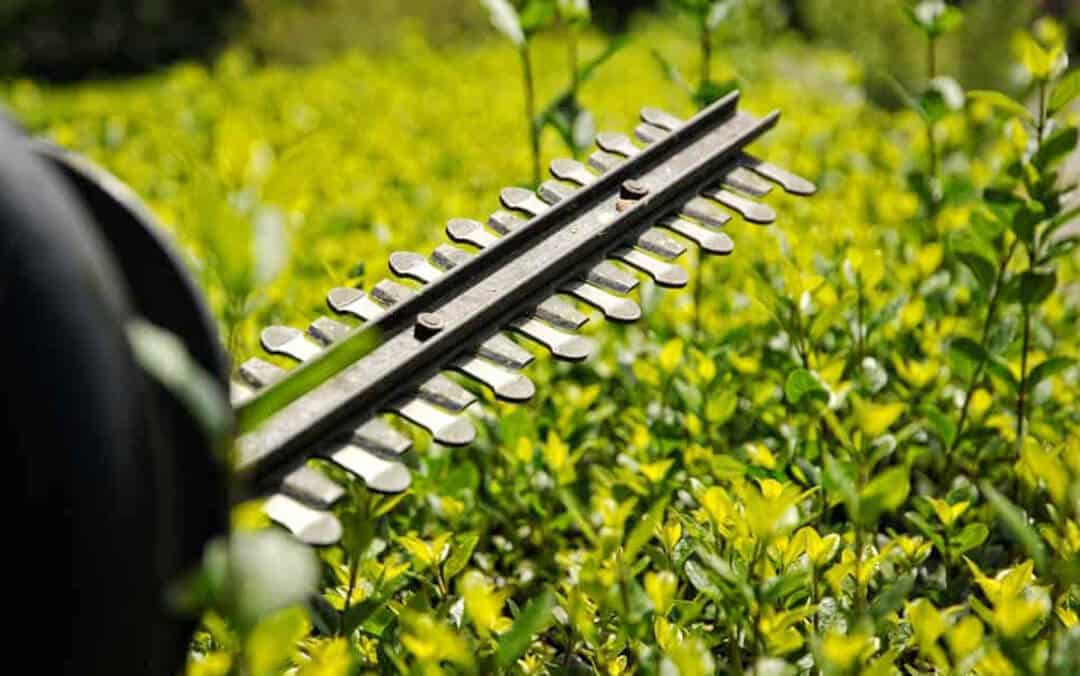 Hedge_Trimmer_Blades