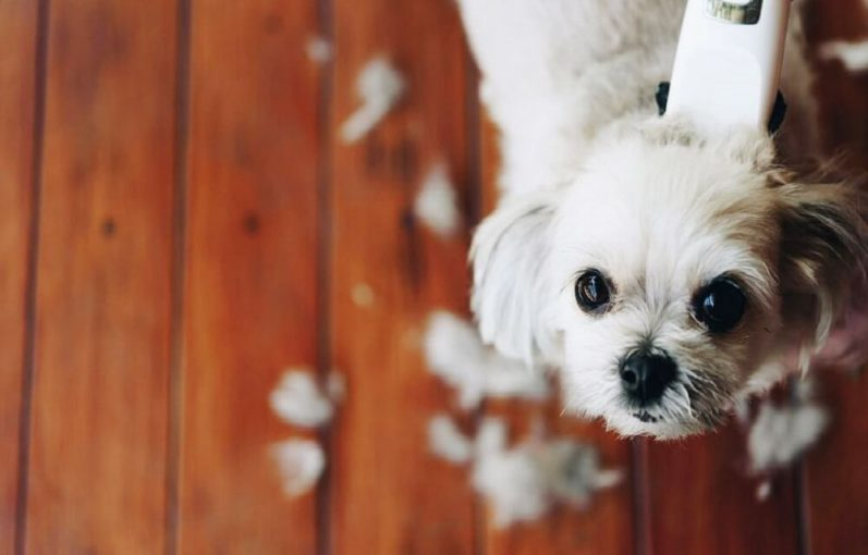 Dog_Clippers_for_Shih_Tzu
