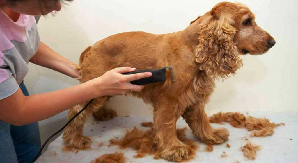 dog clippers for cocker spaniel