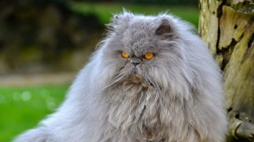 best cat clippers for matted fur