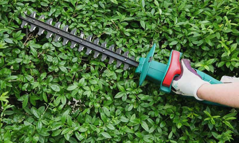 best cordless hedge trimmer 2020
