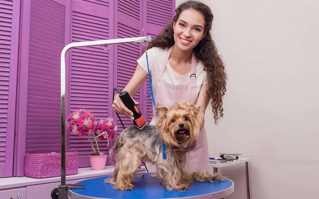 nest dog clippers for yorkie